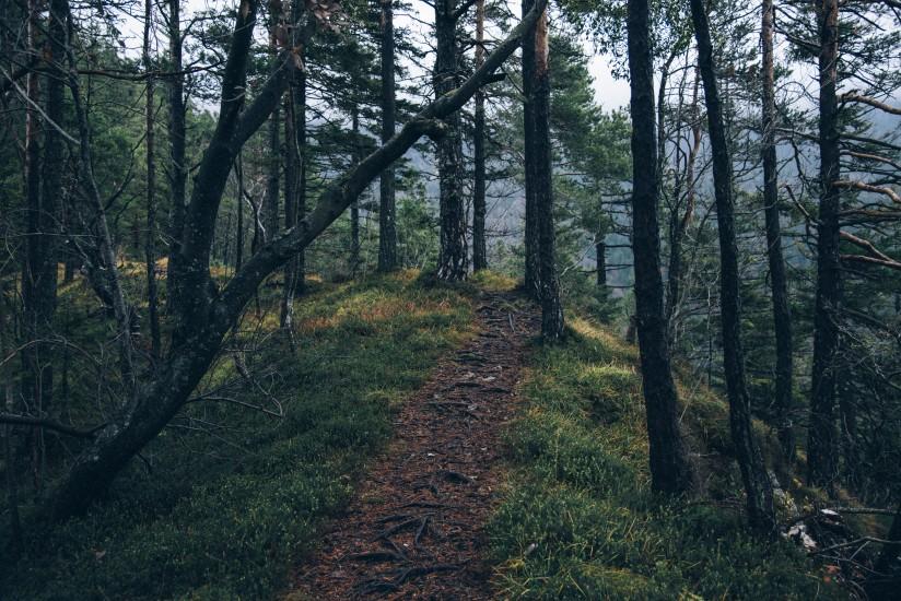 Upozornění ČEZ k odstranění a okleštění stromoví a jiných prostorů